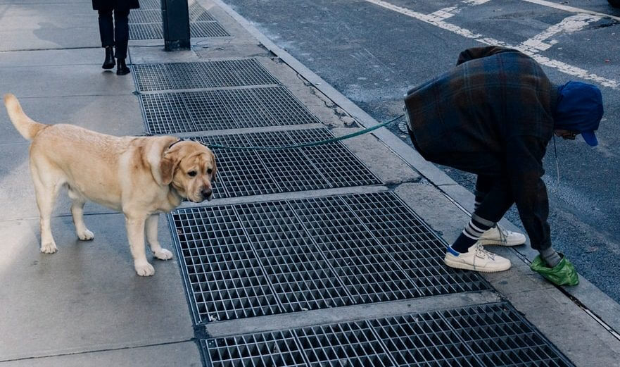 Is not Picking up Dog Poop Illegal