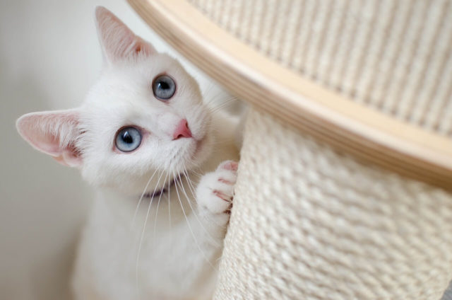 How to stop cat scratching leather furniture